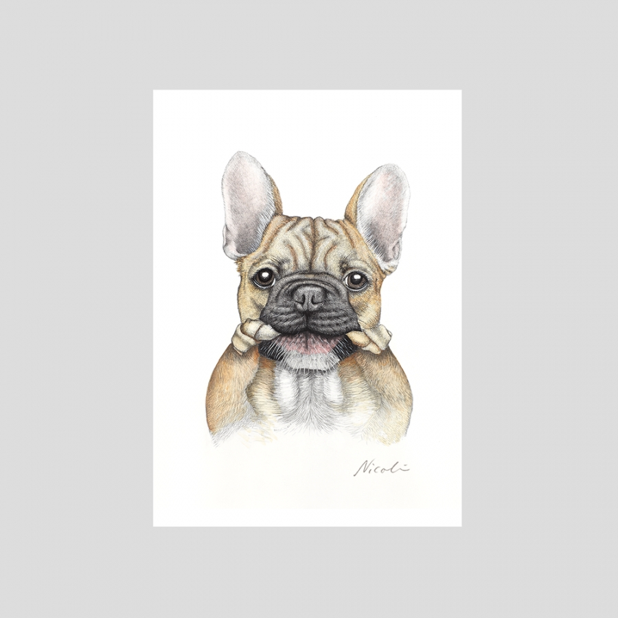 Juliste French bulldog Bruce